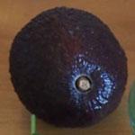 Kupte správnou odrůdu avokáda